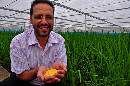 IRRI rice breeder
